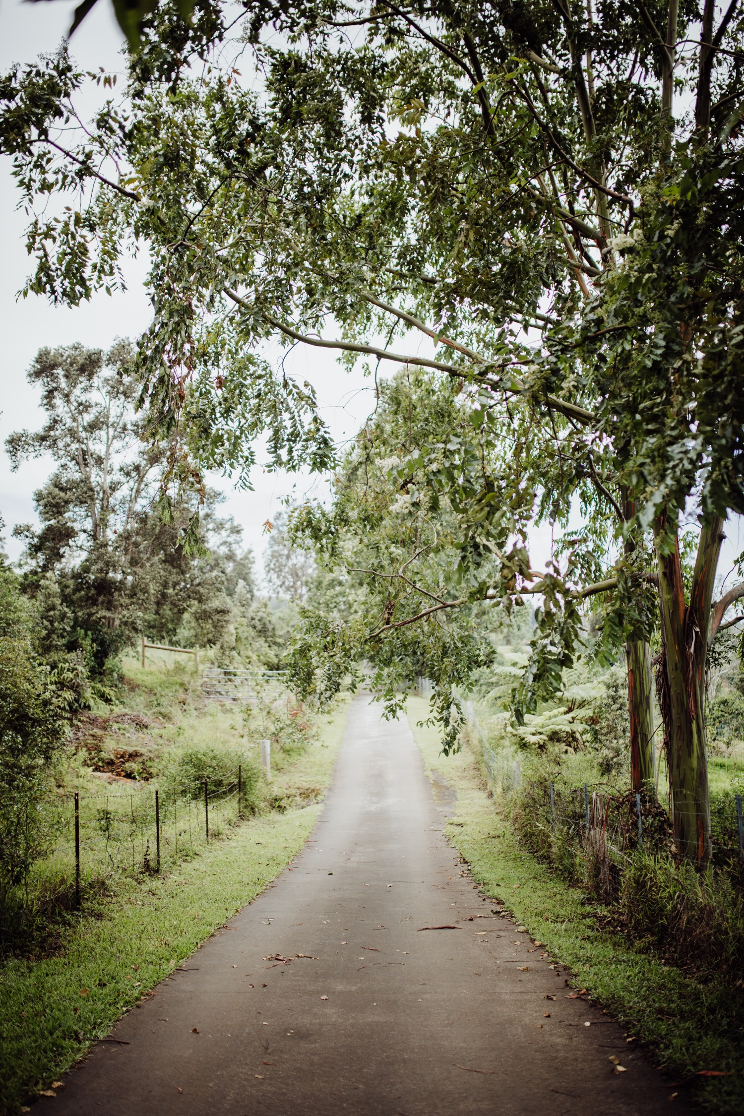 Driveway of sunshower farms